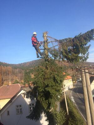 Wir schlagen die Bäume in  Gänserndorf